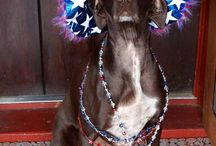 4th of July / Cello is patriotic!
