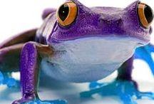 Fabulous Frogs / by Glasstic Bottle