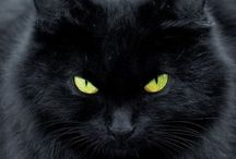 Black cats / Majestic and noble