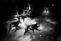 Cani sciolti