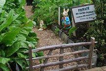Fruit Veg & Herbs