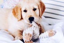 Dog Life / My favorite breeds