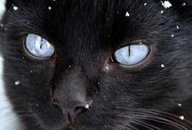CATS ADDICT !!!!❤