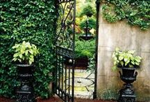 """Garden / """"The glory of gardening: hands in the dirt, head in the sun, heart with nature. To nurture a garden is to feed not just on the body, but the soul."""" - Alfred Austin #garden #secrets #courtyard"""