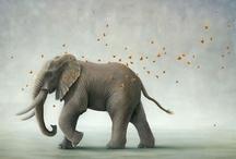 || Elephants & Owls ||