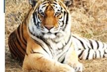 Wildlife Tours of India