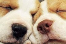 Doggie love / Just love these furry people! / by Muddles Mommy