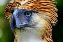 Birds / Bird identification / by Pat Lucy