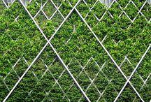 Fences -Cool