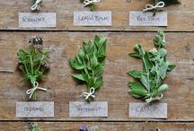 phytotherapy / Herbs for health, natural remedies