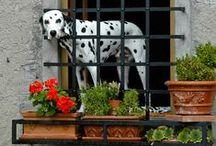 """Ventanas / ♪ ♫ ♪ """"tu ventana, la de las flores la del Sol...""""♪ ♫ ♪ - Manuel García"""