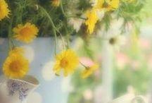 Rêves en couleur. / by Eliana V. Vega ♥.•:*´¨`*:•♥