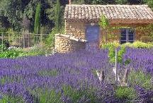 ☀ Summer in Provence. ☀ / Garden Provencal fit harmoniously with its surroundings, with cut lavender, box, myrtle and rosemary and upholstery colors that soften as the sun's intensity.