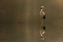 Birds - Waterfowl / by Magnetic Jewelry by J & I