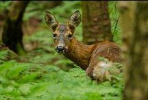 Wildlife (do not disturb)