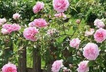 .✿ڿڰۣ--Jardín de rosas -Rose Garden.✿ڿڰۣ-- / .✿ڿڰۣ--