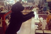 Dogs of Park and Pond / Four-legged friends are welcome here.  A few that we've been able to photograph in-store.