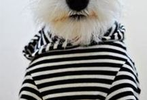 Seeing Stripes / What's not to love about the bold look of a stripe?