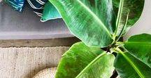 DECO | Cosy - Jungle / Inspirations pour décorer son appartement ou sa maison dans un esprit jungle et cosy. Des plantes, du bleu, du vert mêlés à des tons naturels