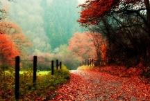 Autumn & Holidays / by Christine Ulbrich