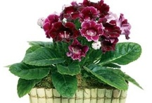 #Plants for your Home!