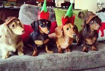 Holiday Dachshunds / by Linda Abele