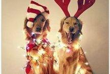 I love holidays! :)  / by Rebecca Bratton