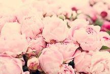 Les fleurs de la vie
