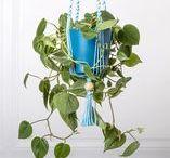 Suspension pour plante ByMadjo Turquoise L80 cm / Suspension en macramé bymadjo.com Suspension macramé Suspension plante Suspension pour plantes