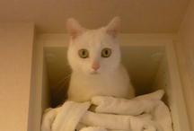 puchikko cat