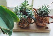 Love Pots
