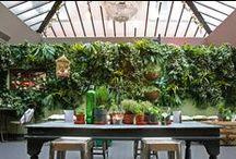 vertical gardens & green walls
