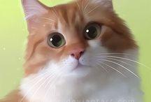 Mici / Gatti