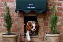 Pet Accessories / by Donna Mc Loughlin