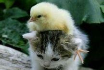 Too cute, too cute to believe / Too cute, too cute to believe