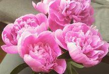 FLOWERS AND PANTS / FLOWERS | BLUMEN | STRÄUßE