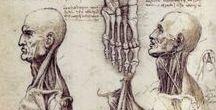 anatomie v kreslení