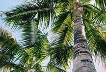 T r o p i c a l  ☽ / Palm Tress + Tropical inspiration