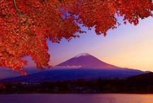 Japan / by Julie Stout