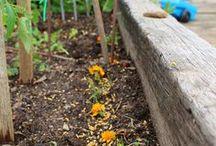 Garden Gnoming