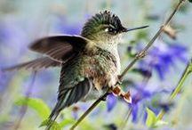Hummingbirds / by Bev Choy
