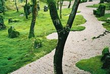 landscaping/ paisajismo