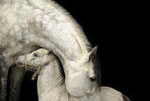 Horses / by LB Paxterra