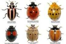 insects / insects / by Beth Viers