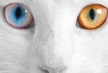 Eyes / all types of Eyes, human eyes, unusual eyes, animal eyes,  / by Beth Viers