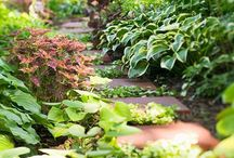 Picturesque Pathways / Strolling a beautiful garden path is food for the soul