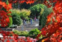 Durham, NC / Morehead Manor is located in Durham, NC which is near RDU Internation Airport. Our manor is near the Durham Performing Arts Center. We have major universities, hospitals, one of the nation's top super-regional malls called Streets at Southpoint, & multiple world-renowned sports teams. We have plenty of visual art attractions & film festivals, gorgeous gardens & a unique history. There is something for everyone! / by Morehead Manor Bed & Breakfast