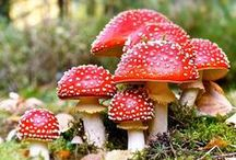 red spotted mushrooms