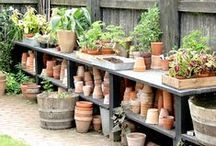 Terracotta Garden Pots / The humble garden clay pot in all it's various states - new, used, mossy, dirty, stacked, stored, empty, full, whatever.