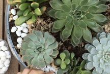 Plantas suculentas / Descubre cómo decorar tu casa con plantas suculentas. Te explicamos paso a paso cómo hacer terrariums con suculentas en tarros de cristal, acuarios, bandejas de cristal, etc.